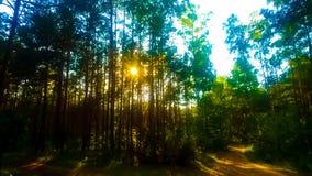 Beuthiful solnedgång i den mörka skogen royaltyfri fotografi