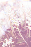 Beutiful flowers with color filter.  Stock Photos