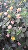 Beutiful flowers Stock Photos