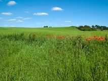 Beutiful green field background Stock Image