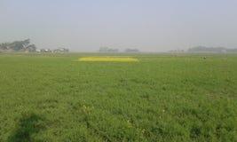 beutifull Bangladesch Stockfotografie