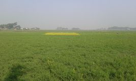 beutifull Bangladesh Arkivbild