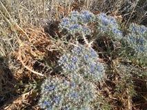 Beutifull escondido da natureza flores selvagens Fotos de Stock