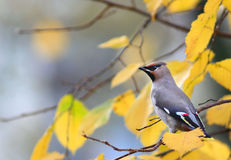 Beutifull wild bird in a tree branch Stock Photography