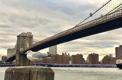 Beutifullfoto in Brookling-Brug in de Stad van New York stock foto