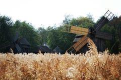 beuty Autum România锡比乌的森林 库存照片