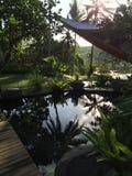 Beuty degli effetti della giungla del giardino Immagine Stock