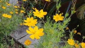 Beuty kwiaty Zdjęcia Stock