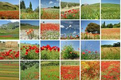 Beuty of red poppies Royalty Free Stock Image