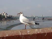 Beutyfull in einem bird& x27; ruhige Momente s stockbilder