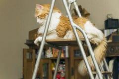 Bevallige kat op ladder stock foto