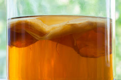 Bevanda del tè fermentata kombucha naturale sana Fotografia Stock Libera da Diritti