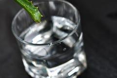 Bevanda della vera dell'aloe Immagine Stock Libera da Diritti