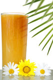 Bevanda tropicale Fotografia Stock