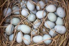 bevarat ägg royaltyfria foton