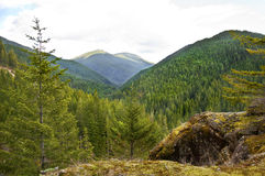 Bevarat bergskoglandskap royaltyfri fotografi