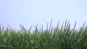 Bevattna att falla i toppen ultrarapid på gräset stock video