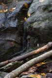 Bevattna att flöda från en spricka i stora stenblock, deadfallförgrund, royaltyfria foton