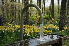 Bevattna att flöda från ett böjelserör in i en behållare i en trädgård i L royaltyfri bild