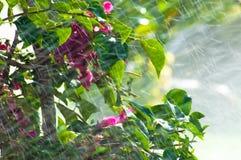 Bevattna blommor arkivfoto