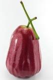 Bevattna den rosa guavaen Arkivbilder