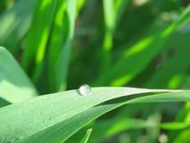 Bevattna droppe på sidorna i morgonen Fotografering för Bildbyråer