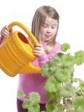 bevattna för blommor fotografering för bildbyråer