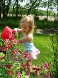 bevattna för blommor royaltyfri fotografi