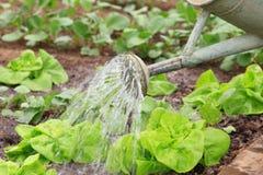 bevattna för grönsak Arkivfoton