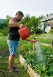 bevattna för manväxter Royaltyfri Bild