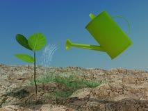 bevattna för växt Fotografering för Bildbyråer