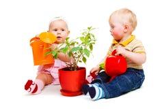 bevattna för växt Arkivfoton