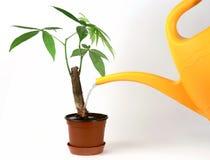 bevattna för växt Arkivfoto
