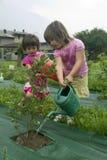 bevattna för växter arkivbilder