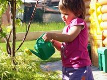 bevattna för växter Royaltyfri Foto