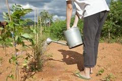 bevattna för kvinnligväxter Arkivbild