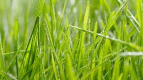 bevattna f?r gr?s Droppar av vattennedgången på nytt grönt gräs arkivfilmer