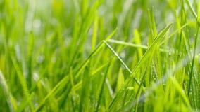 bevattna f?r gr?s Droppar av vattennedgången på nytt grönt gräs lager videofilmer