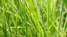 bevattna f?r lawn Vattendroppar p? gr?set arkivfilmer