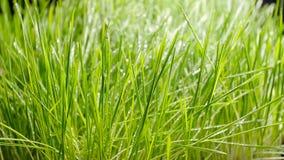 bevattna f?r lawn Vattendroppar p? gr?set lager videofilmer