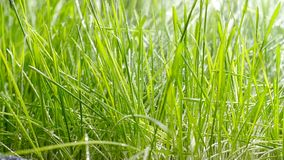 bevattna f?r lawn Vattendroppar p? gr?set stock video