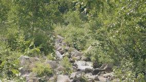 Bevattna flöde i den snabba floden i sommarskog på berget Bergflodlandskap arkivfilmer
