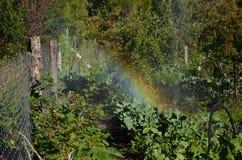Bevattna fruktträdgården med en horisontalregnbåge - Royaltyfri Bild