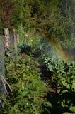 Bevattna fruktträdgården med en regnbåge - lodlinje Fotografering för Bildbyråer