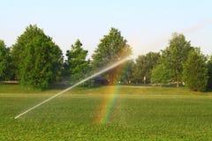 Bevattna gräsmatta Arkivfoto