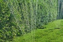Bevattna gräsmattan i sommartid arkivbild