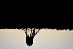 Bevattna hålet på solnedgången Royaltyfri Fotografi