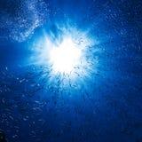 Bevattna havet ytbehandlar mycket av lite fisk och luftar bubblar Arkivfoton