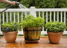 Bevattna hem trädgården fotografering för bildbyråer