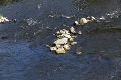 Bevattna i laken Fotografering för Bildbyråer